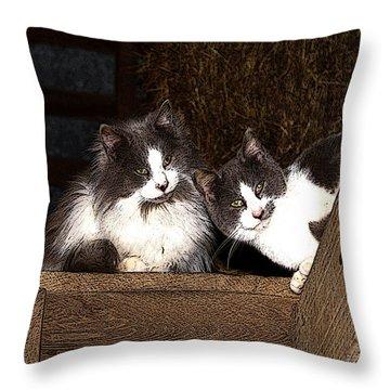 Barn Cats Throw Pillow by TnBackroadsPhotos