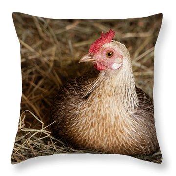 Barn Hen Throw Pillow