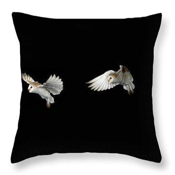 Barn Owl In Flight Throw Pillow by Stephen Dalton