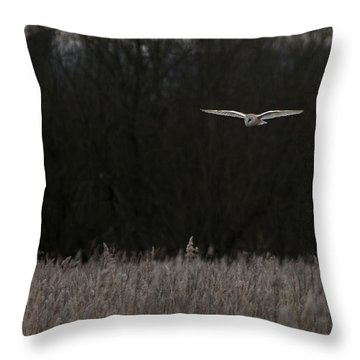 Barn Owl The Silent Hunter Throw Pillow