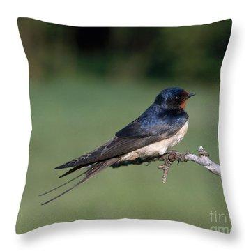 Barn Swallow Throw Pillow by Hans Reinhard