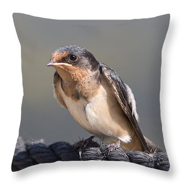 Barn Swallow On Rope I Throw Pillow by Patti Deters
