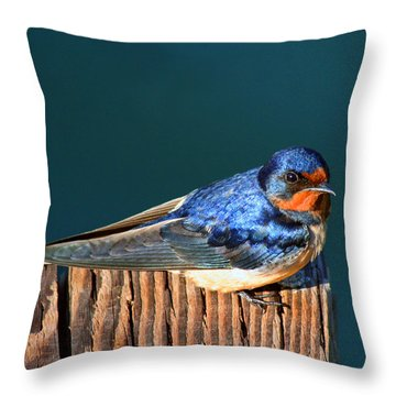 Throw Pillow featuring the photograph Barn Swallow Perching by Bob and Jan Shriner