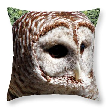 Barred Owl 2 Throw Pillow by Rose Santuci-Sofranko