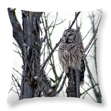 Barred Owl 2 Throw Pillow by Steven Clipperton
