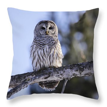 Throw Pillow featuring the photograph Barred Owl 3 by Gary Hall