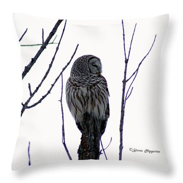 Barred Owl 3  Throw Pillow by Steven Clipperton