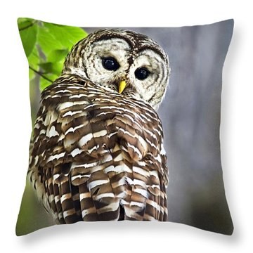 Barred Owl Throw Pillow by Christina Rollo
