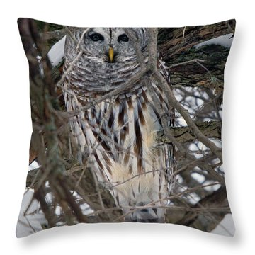 Barred Owl Hiding Throw Pillow by Timothy McIntyre