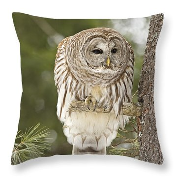 Barred Owl Hunting Throw Pillow