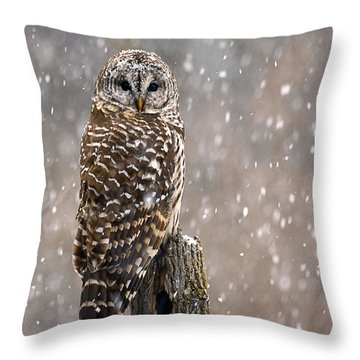 Barred Owl In A New England Snow Storm Throw Pillow