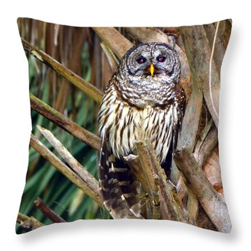 Barred Owl In Palm Tree Throw Pillow by Jodi Terracina