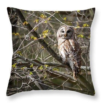 Barred Owl Portrait Throw Pillow by Bill Wakeley