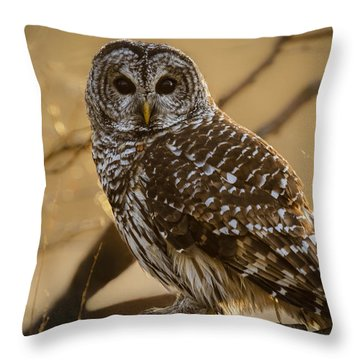 Throw Pillow featuring the photograph Barred Owl by Scott Bean