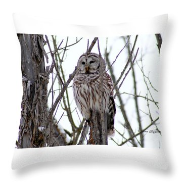 Barred Owl Throw Pillow by Steven Clipperton