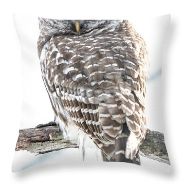 Barred Owl2 Throw Pillow by Cheryl Baxter