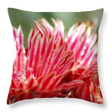 Barrel Cactus Flower Throw Pillow