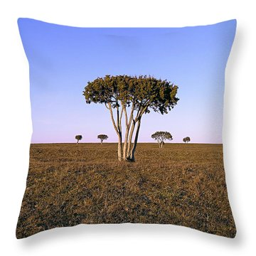 Barren Tree Throw Pillow