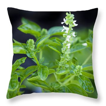 Basil With White Flowers Ready For Culinary Use Throw Pillow by David Millenheft