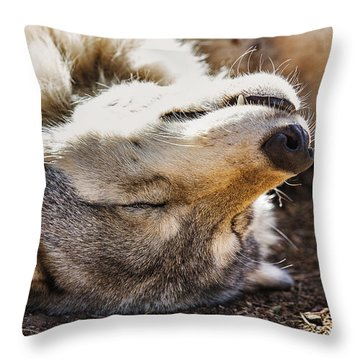 Throw Pillow featuring the photograph Basking In The Sun by Brian Cross