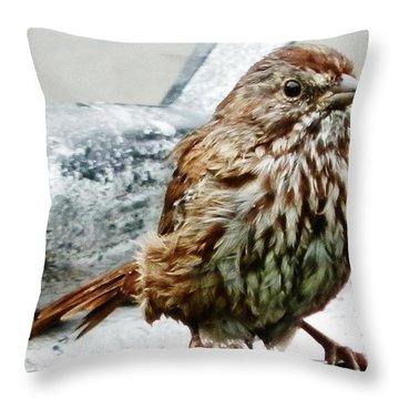 Throw Pillow featuring the photograph Bathe Then Fluff by VLee Watson