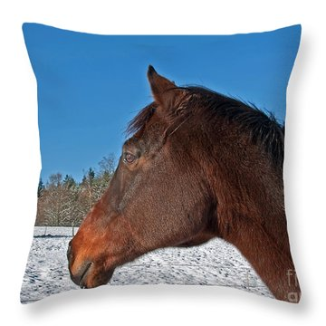 Bay Thoroughbred Horse Side View In Winter Throw Pillow