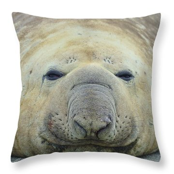 Beach Bum Throw Pillow by Tony Beck