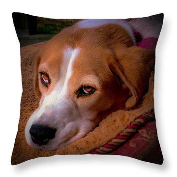 Beagle Blues Throw Pillow by Karen Wiles