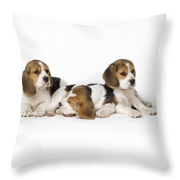 Beagle Puppies, Row Of Three, Second Throw Pillow