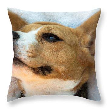 Beagles Dreams Throw Pillow by Eti Reid
