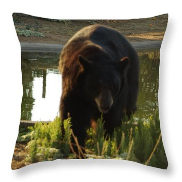 Bear 1 Throw Pillow