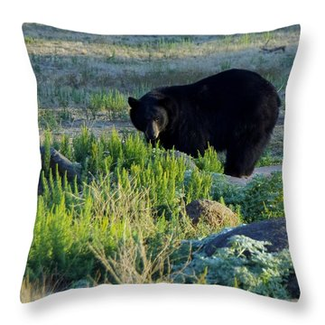 Bear 3 Throw Pillow