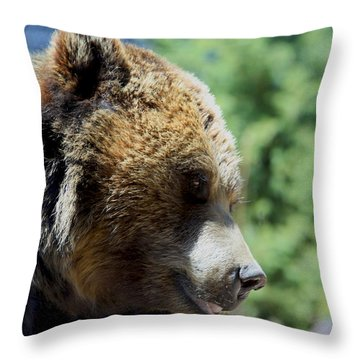 Bear Throw Pillow by Chris Thomas