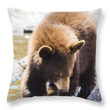 Bear Cub Throw Pillow