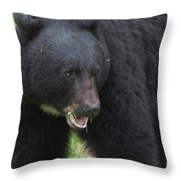 Throw Pillow featuring the photograph Bear by Rod Wiens