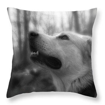 Bear Tooth Not Camera Shy Throw Pillow