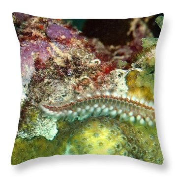 Throw Pillow featuring the photograph Bearded Fireworm On Rainbow Coral by Amy McDaniel