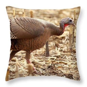 Bearded Wild Turkey Hen Throw Pillow
