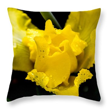 Bearded Iris Morning Dew Throw Pillow