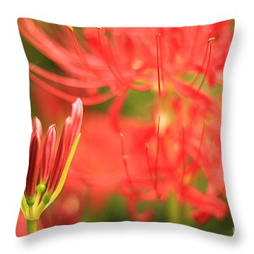 Beautiful Amaryllis Flower Red Spider Lily Aka Resurrection Lily Throw Pillow