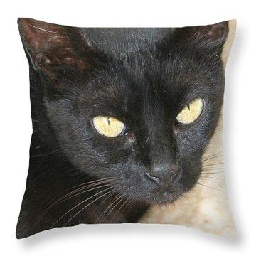 Beautiful Black Cat Portrait  Throw Pillow by Tracey Harrington-Simpson