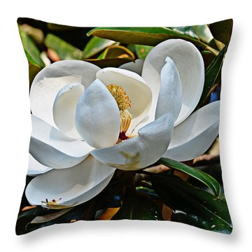 Throw Pillow featuring the photograph Beautiful Blossom by Linda Brown