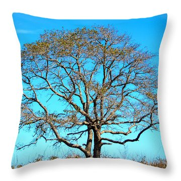 Beautiful Branching Throw Pillow by Debra Martz