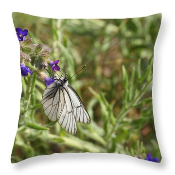 Beautiful Butterfly In Vegetation Throw Pillow