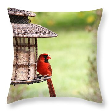 Throw Pillow featuring the photograph Beautiful Cardinal by Trina  Ansel