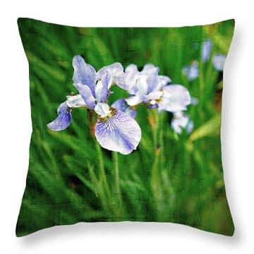 Beautiful Louisiana Hybrid Iris Throw Pillow by Marianne Campolongo
