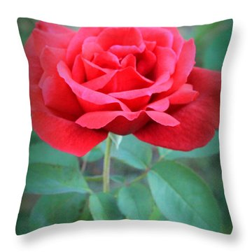 Beautiful Morning Rose  Throw Pillow