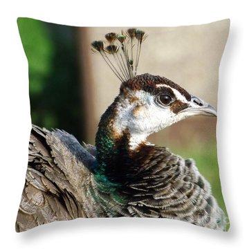 Beautiful Peahen Throw Pillow