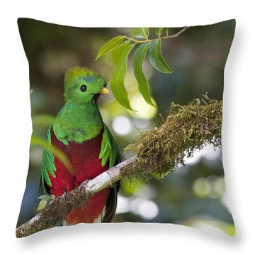 Beautiful Quetzal 1 Throw Pillow by Heiko Koehrer-Wagner