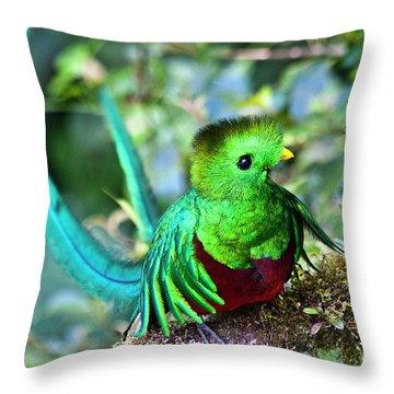 Beautiful Quetzal 5 Throw Pillow by Heiko Koehrer-Wagner